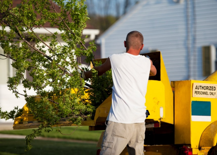 Tree Chipping Service Barrie